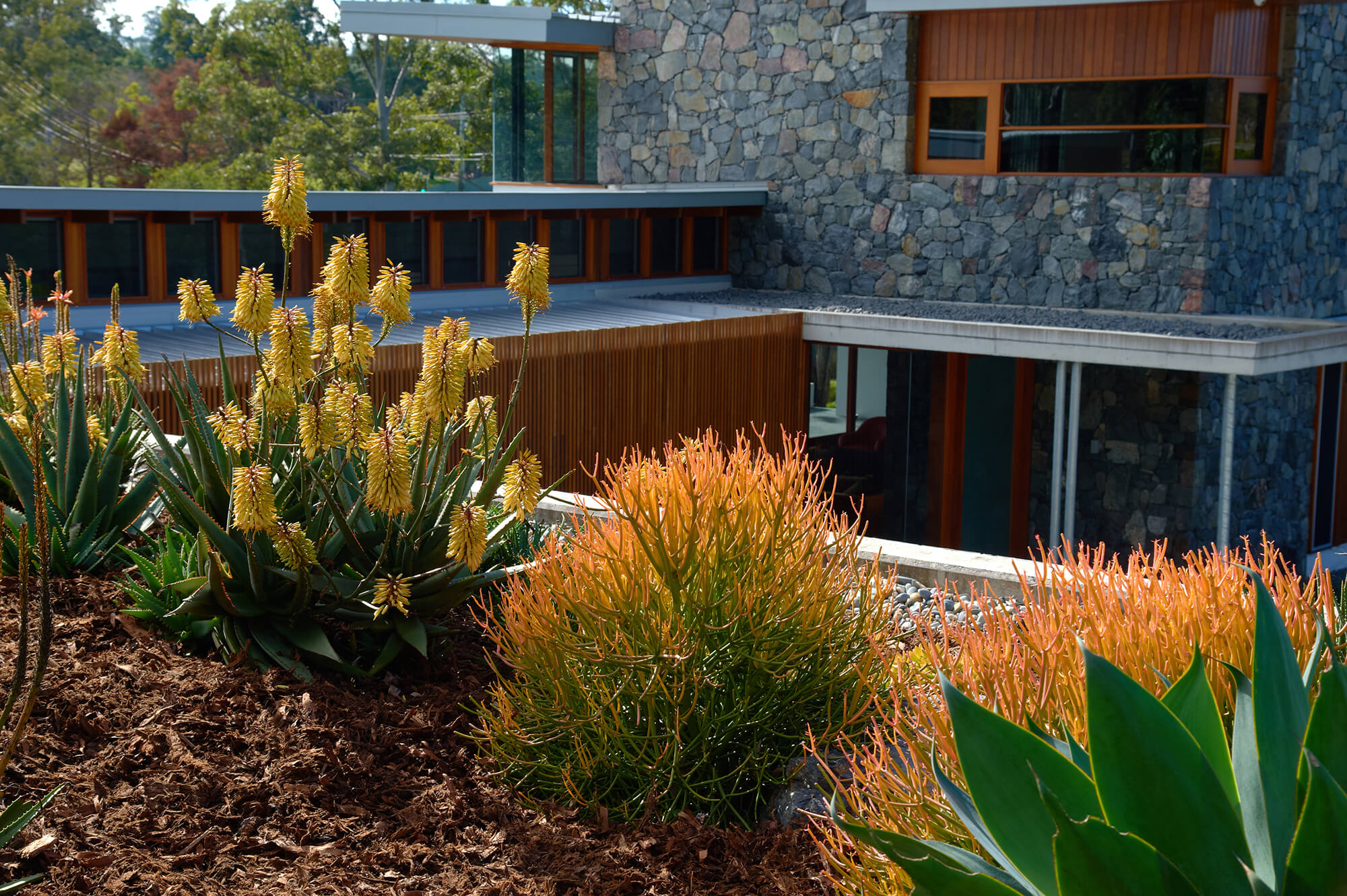 brookfield contemporary arid landscaping rooftop garden aloe