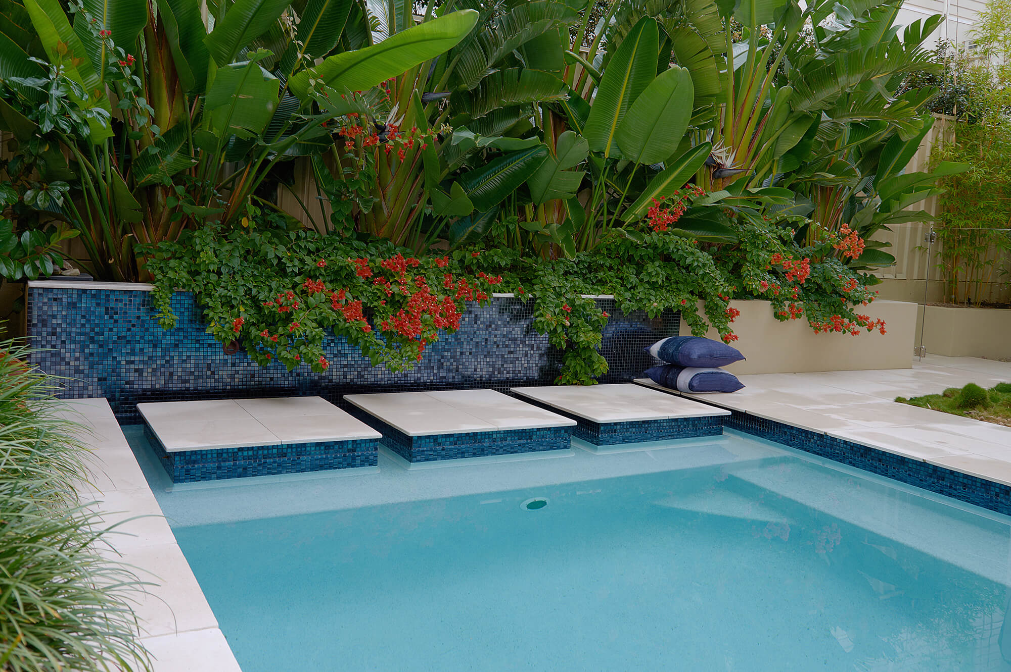 indooroopilly poolscaping tropical feature planting