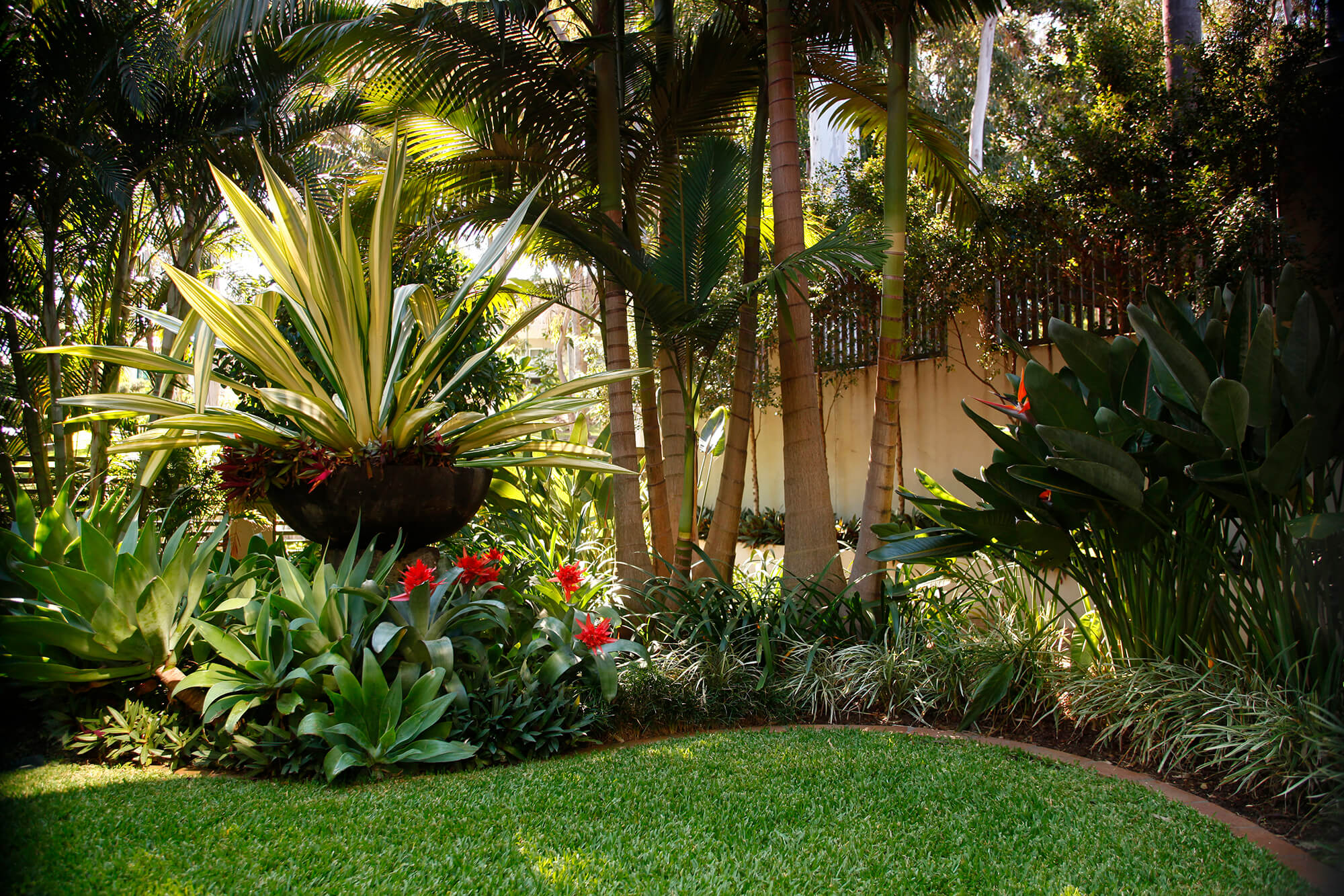 Tropical garden coorparoo boss gardenscapes for Garden design queensland