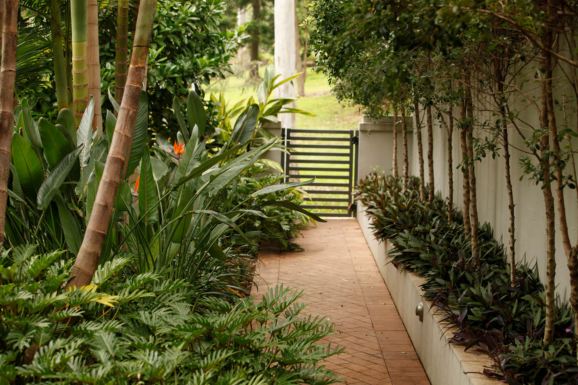 coorparoo tropical landscaped walkway