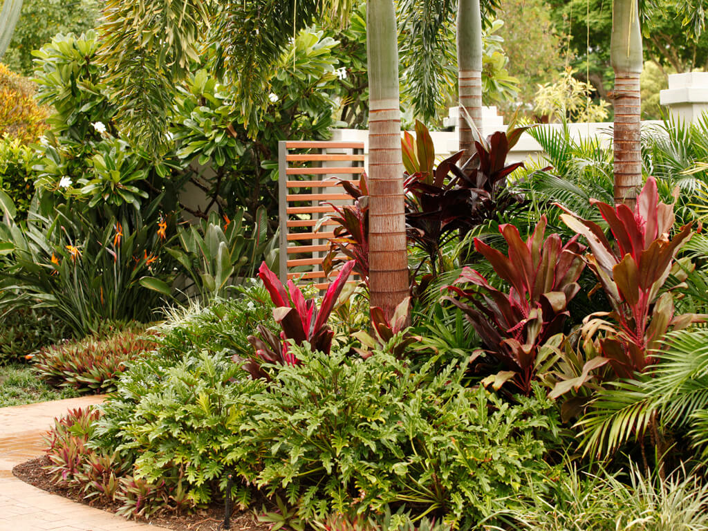 coorparoo tropical lush garden and palms