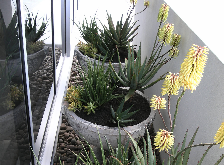 new farm apartment outdoor succulents