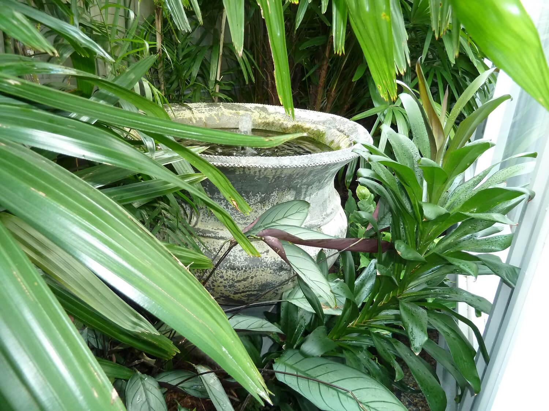 taringa water feature