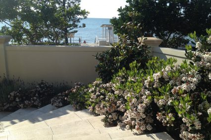 redcliffe beachfront rhaphiolepis landscaping and sandstone paving