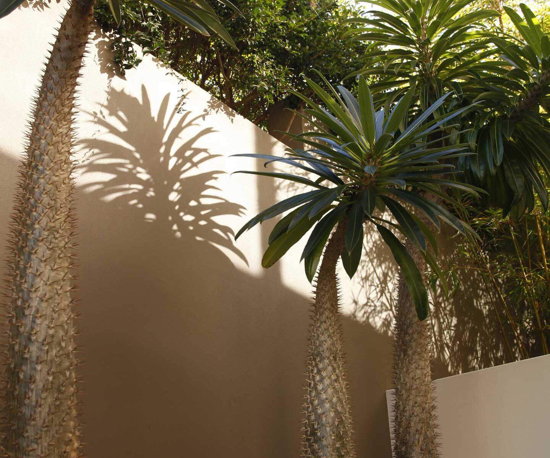 succulent cactus terraced garden