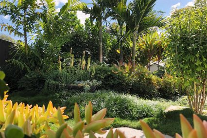 East Brisbane tropical planting creates a relaxed lifestyle garden